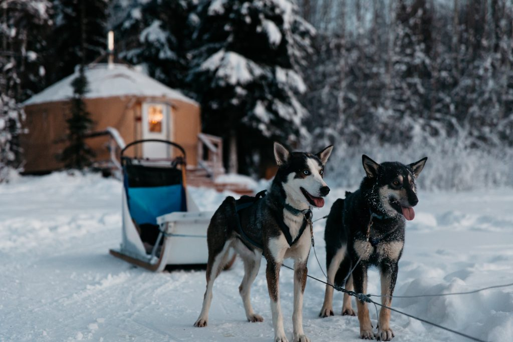 Huskies in the snow to illustrate   Element - The Prize & Incentive People