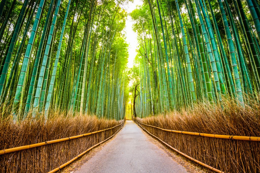 Dream Incentive Destination: Kyoto Bamboo Forest   Element - The Prize & Incentive People